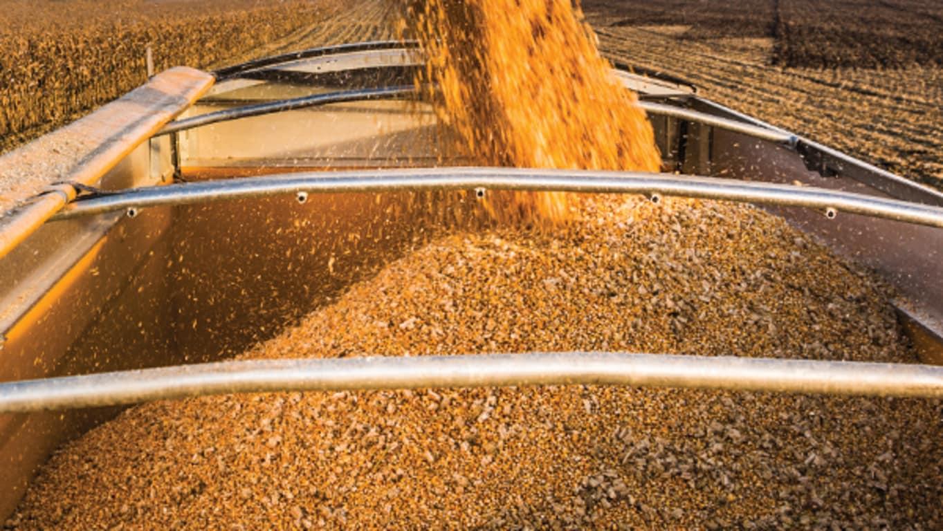 Картинки по запросу вантажівка із кукурудзою